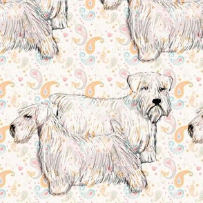 sealyham_terrier