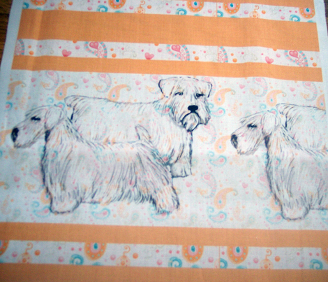 sealyham_terriers_with_border