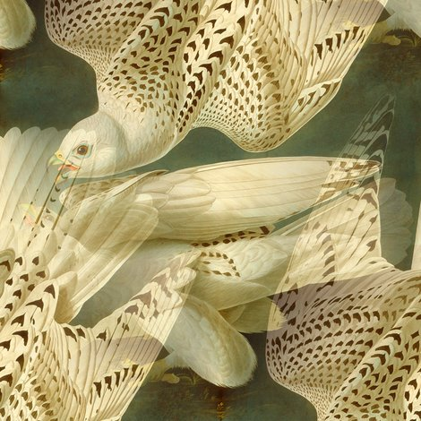 Rr1891339_rfalcon_audubon_painting_national_art_gallery_seamless_shop_preview