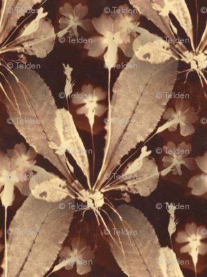 Botany Sepia