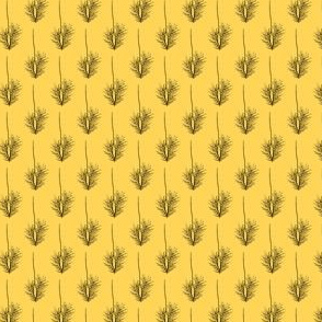 andropogon virginicus yellow