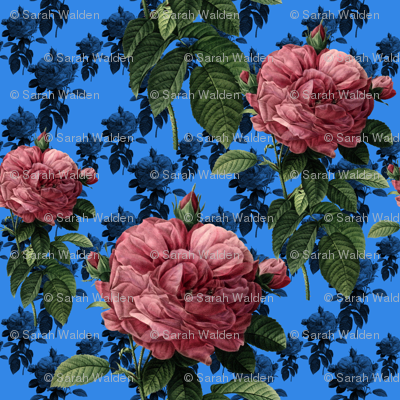 Redoute' Roses ~ Sweet Pink & Blue ~ Large