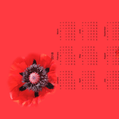 Indulge in the Color of a Really Fantastic Red Poppy