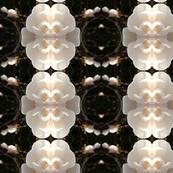 Magnolias Collide