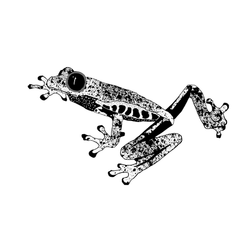 Graphic Frog fabric by animotaxis on Spoonflower - custom fabric