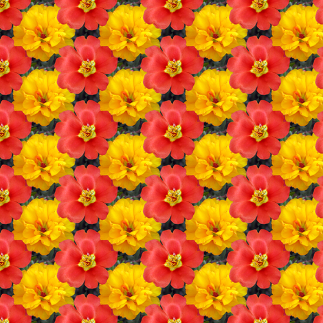Yellow and Red Moss Roses fabric by eclectic_house on Spoonflower - custom fabric