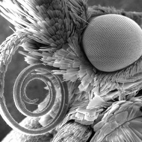 Moth SEM