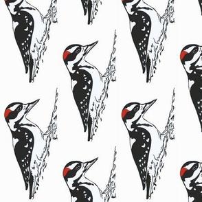 Harry Woodpecker 2i
