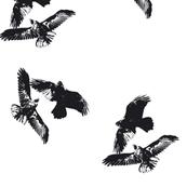 large_ravens