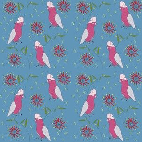 Pink Galah and Firewheel