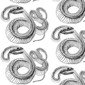 snake skeleton gray scale