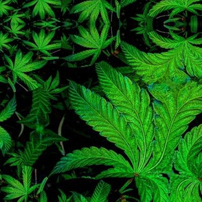 Weed Leaf Fractal