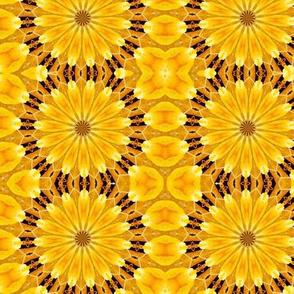 Sunburst flower power