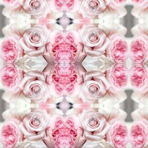 Bridal Roses 1