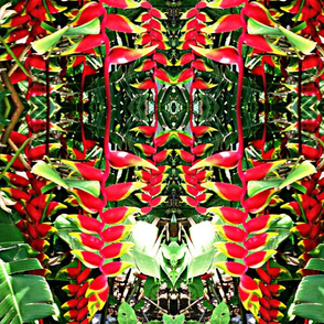 Hawaiian Mirrored Heliconia