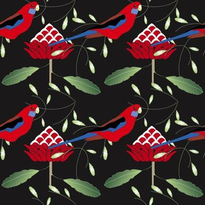Waratah and Rosella - Black