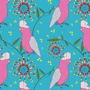 Galah and Firewheel - aqua
