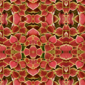 Coral Floral
