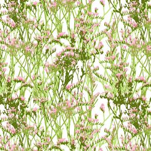 skopelos sea flowers