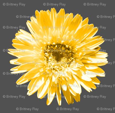 Daisy Swatch