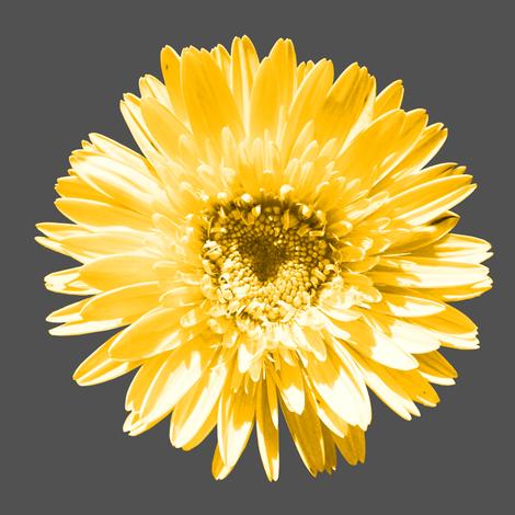 Daisy Swatch fabric by pond_ripple on Spoonflower - custom fabric