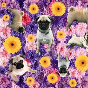 Pretty Pugs