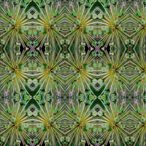 Abstract Allium