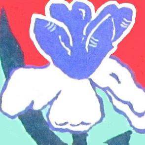 Iris in the USA
