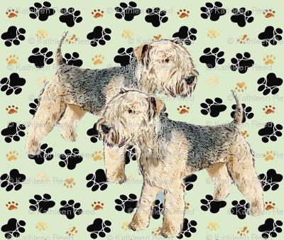Lakeland_Terriers