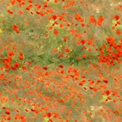 Rrrrrrmonet_poppies_only_original_shop_thumb