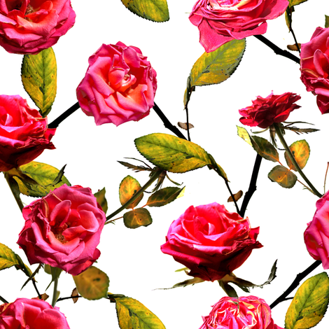 Photo of Roses Pattern (white background) fabric by lusykoror on Spoonflower - custom fabric