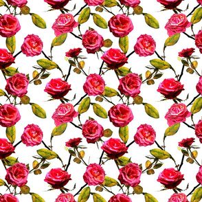 Photo of Roses Pattern (white background)