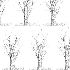 abstracted_birch_study