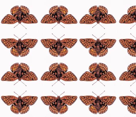 Checkerspot Butterfly fabric by rezhoney on Spoonflower - custom fabric
