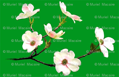 white_flowers_download