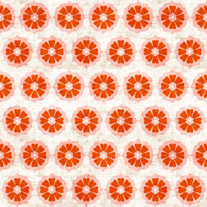 orange_cushionflower