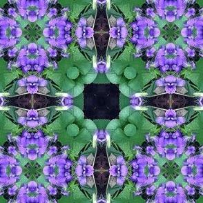 violet square 1 -4300