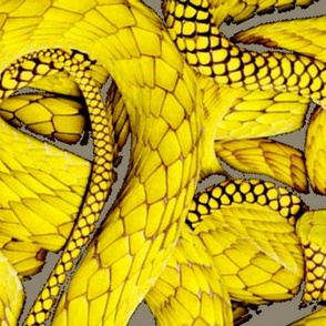 Not So Mellow Yellow Snakes