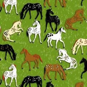 AppleLoosa Horses