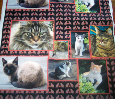 cat_collage
