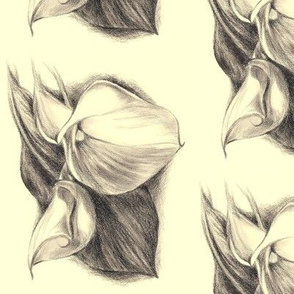 Calla Lilly Drawing