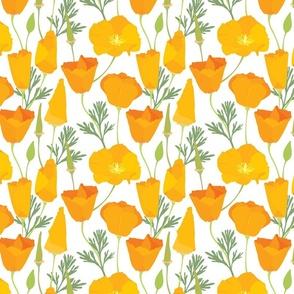 Esholcia_pattern