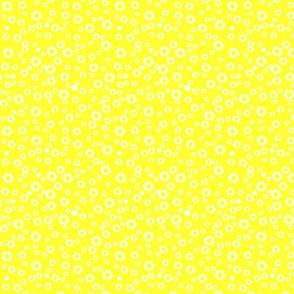 Bright yellow daisies