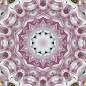 Pink Hyacinth kaleidoscope