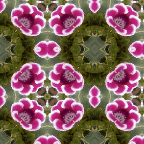 Red Flower Kaleidoscope