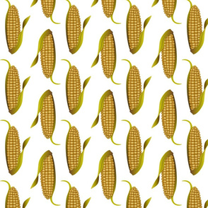 Ears of Corn on White