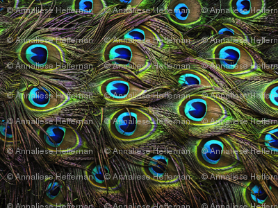 Rpeacock-feathers-background-hd-wallpapers_preview
