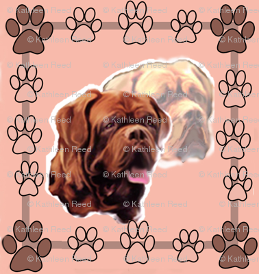 Dogue De Bordeaux Portraits