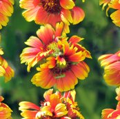 Rrtriple_flower_3428_shop_thumb