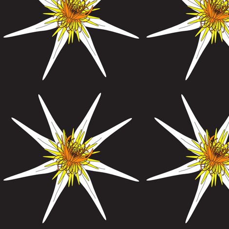Waterlily Blossom on Black fabric by vanillabeandesigns on Spoonflower - custom fabric